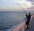 Fishing cuba, When, where, what kind of fishing gear, DIY fishing tips and tackle
